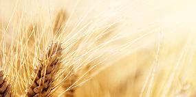 农业会计课程实训